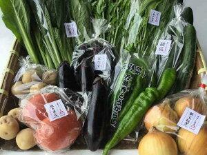 【定期便】旬の京野菜毎月お届けBコース(全6回)