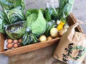 【ふるさと納税】【定期便】計8回お届け!京都丹波産【栽培期間中農薬・化学肥料不使用】米5kg&野菜&平飼い卵 ひと月分おまかせセット※初回の発送は2020年5月開始。
