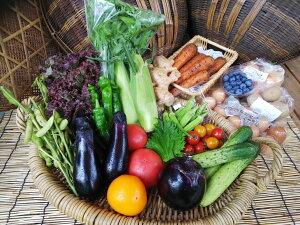 【ふるさと納税】【定期便】《アスカ有機農園》(栽培期間中農薬・化学肥料不使用)旬の京野菜セットL(平飼い卵付)*毎月お届け全12回