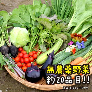 【ふるさと納税】【定期便】京都府・亀岡産 自然農法・自然栽培で育てた体も心も喜ぶ、かたもとオーガニックファームの季節のお野菜セット 毎回約20品目(毎月お届け全12回コース)※