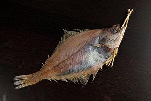 【ふるさと納税】日本海産 カレイ一夜干し特大サイズ5枚