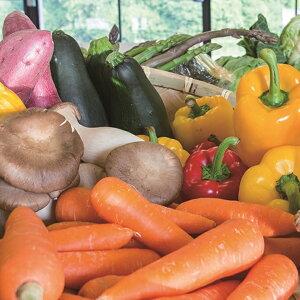 【ふるさと納税】京丹後産・旬の野菜 5〜8種たっぷり詰め合わせセット