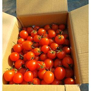 【ふるさと納税】通年糖度8以上のミニトマト「アマメイド」1kg【1101036】
