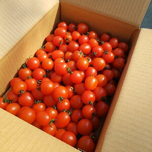 【ふるさと納税】通年糖度8以上のミニトマト「アマメイド」3kg【1101038】
