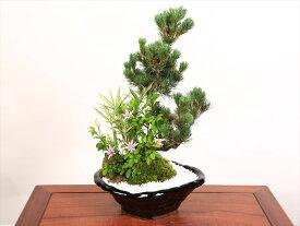 【ふるさと納税】養庄園 季節の寄せ植え盆栽