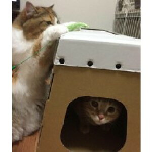【ふるさと納税】ダンボール製 猫ハウス とびばこ とんで ミルにゃん!