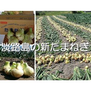 【ふるさと納税】H043*淡路島の新たまねぎ(5kg×2回発送)