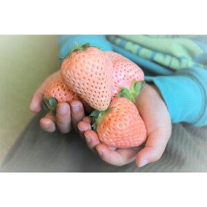 【ふるさと納税】EC04*淡路島産 白いちご『淡雪』 冷凍 形不揃い1kg