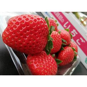 【ふるさと納税】CY75*淡路島で育った苺 4パック入り(約1kg入り)