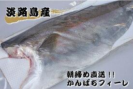 【ふるさと納税】FJ02*【訳あり品】淡路島 朝締め かんぱちフィーレ(冷蔵)