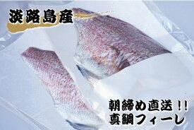 【ふるさと納税】FJ03*【訳あり品】淡路島 朝締め 真鯛フィーレ(冷蔵)