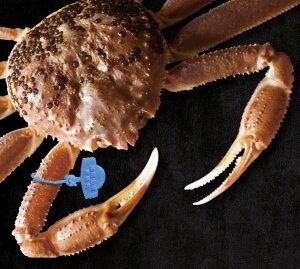【ふるさと納税】【期間限定】活け津居山かに(800g〜1000g)×1匹 / カニ 蟹