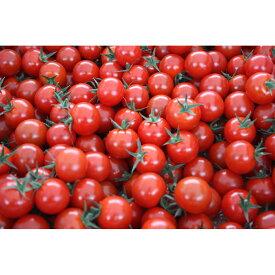 """【ふるさと納税】愛情たっぷり育てられた極糖トマト """"うふふの実""""1kg×2"""