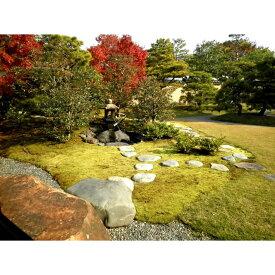 【ふるさと納税】 スナゴケで庭園緑化1平方メートル