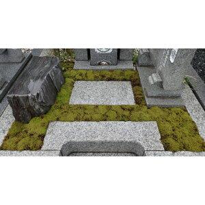 【ふるさと納税】スナゴケで墓地緑化1平方メートル