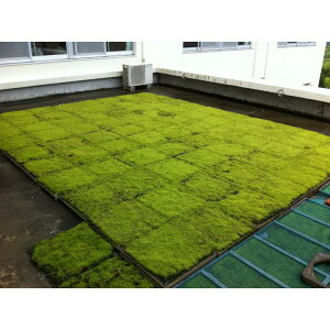 【ふるさと納税】スナゴケで屋上緑化1平方メートル