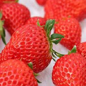 【ふるさと納税】4品種いちごパック詰め合わせ(300g×4) 【果物類・いちご・苺・イチゴ】 お届け:2020年1月7日〜3月末まで