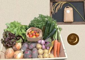【ふるさと納税】愛情たっぷり無農薬野菜とこだわり玄米1kgのセット