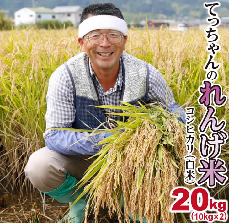 【ふるさと納税】2018年収穫 南あわじ市松帆産 てっちゃんのれんげ米コシヒカリ 20kg(白米)