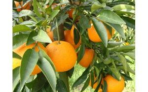 【ふるさと納税】淡路島紅なるとオレンジ