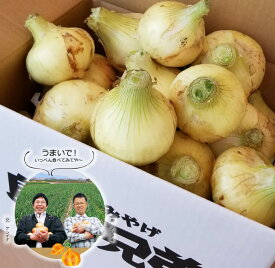 【ふるさと納税】淡路島産 新たまねぎ 9kg