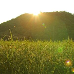 【ふるさと納税】猪名川町のおこめ(キヌヒカリ10kg)※玄米