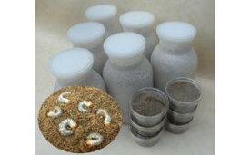 【ふるさと納税】クワガタ虫(幼虫)菌糸ビン付 2種×3本セット