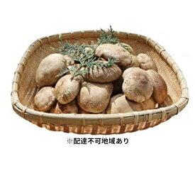 【ふるさと納税】菌床生しいたけ 1.3kg 【野菜・きのこ】