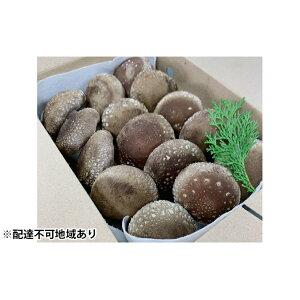 【ふるさと納税】兵庫県産 生椎茸「しいたけ小町」500g 【野菜・きのこ】