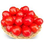 【ふるさと納税】【奈良県天理市産】フルーツミディトマト中玉1.5kg【1070779】