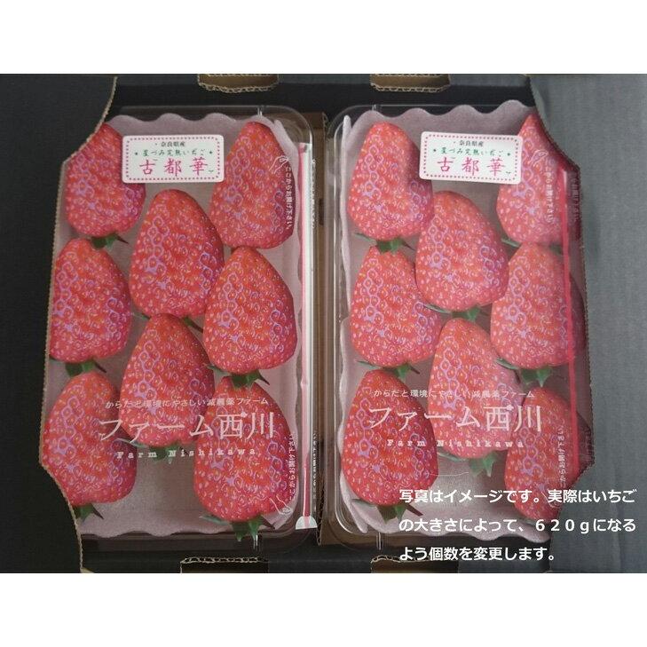 【ふるさと納税】奈良県 橿原市産のあまさが特徴のいちご「古都華(ことか)」限定300ケース(620g以上)