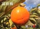 富有柿特選10kg(33〜42個入)