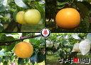 【ふるさと納税】梨子本果樹園の梨(幸水、二十世紀、豊水、詰め合わせいずれか:品種指定可)5kg (9〜13個入)※着日時はご指定いただ…