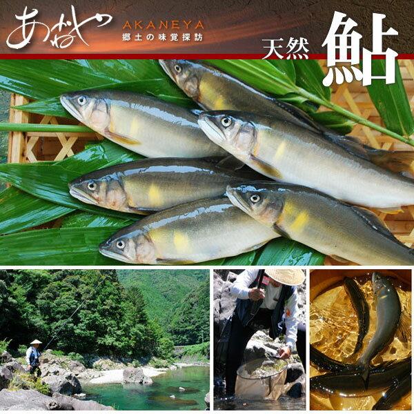 【ふるさと納税】天然鮎1kg(10〜12匹)