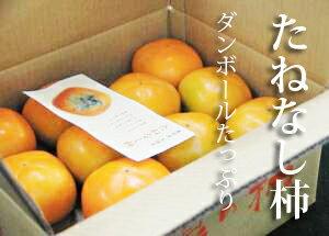 【ふるさと納税】たっぷりたねなし柿ダンボール5kg(18〜25コ程度)※着日時はご指定いただけません10月上旬から11月上旬順次発送します
