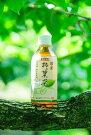 柿の葉茶ペットボトル48本(24本×2ケース)