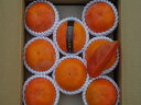 【ふるさと納税】富有柿5kg(16〜18個) 日本野菜ソムリエ協会大賞受賞品※着日時はご指定いただけません11月中旬から12月上旬順次発送…