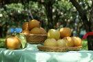 梨子本果樹園の梨(二十世紀、豊水、詰め合わせいずれか)7.5kg(13〜20個入)