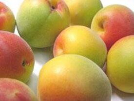 【ふるさと納税】有機栽培 完熟南高梅5kg※6月中旬〜7月上旬発送予定
