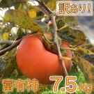 富有柿わけあり!(約7.5kg)