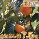たねなし柿わけあり!(約7.5kg)