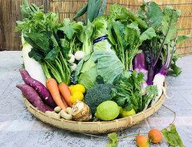 【ふるさと納税】【野菜セット】産地直送!新鮮とれたて旬の野菜