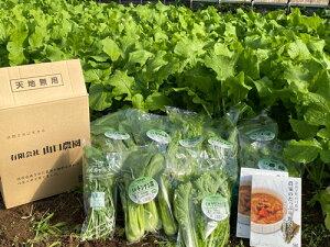 【ふるさと納税】(チルド) 山口農園 有機野菜 おまかせセット+カレー2箱 詰合せ/ オーガニック レトルトカレー