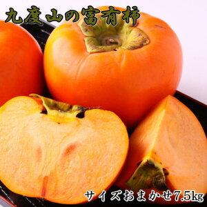 【ふるさと納税】[柿の名産地]九度山の富有柿約7.5kgサイズおまかせ