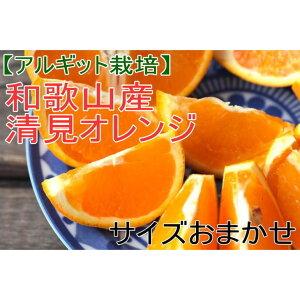 【ふるさと納税】【アルギット栽培】和歌山産清見オレンジ約5kg(M〜3Lサイズおまかせ)
