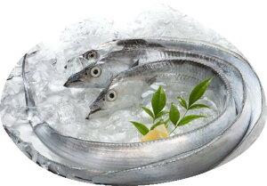 【ふるさと納税】紀州 太刀魚2本(1本:500〜600g)