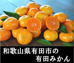 【ふるさと納税】有田みかんてんこ盛り