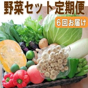 【ふるさと納税】定期便 旬の新鮮野菜セットB【年6回】たっぷり15品以上