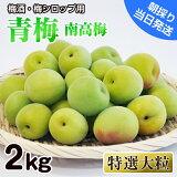 【ふるさと納税】青梅(南高梅)特選大粒2kg和歌山県産