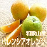 【ふるさと納税】バレンシアオレンジ5kg(めずらしい国産です)